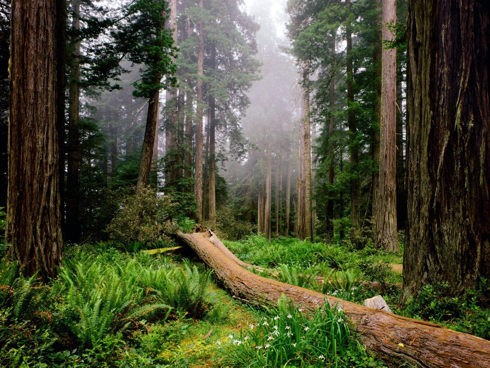 عکس طبیعت زیبا سایز بزرگ